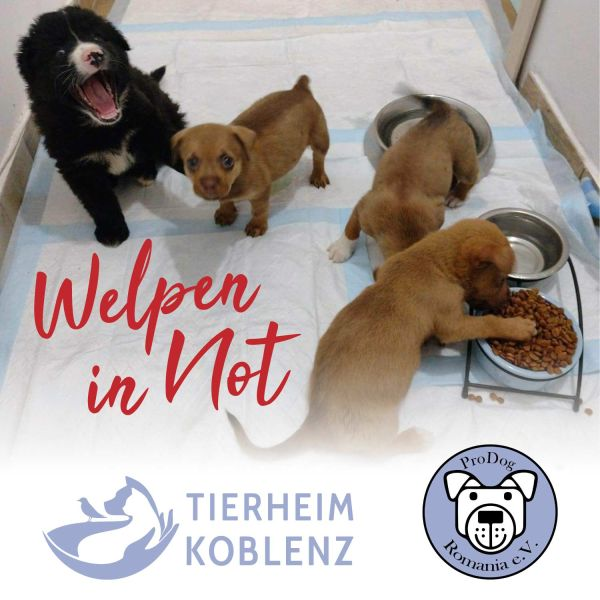 "TierSchutzTaler ""Tierheim Koblenz + ProDog Romania"""